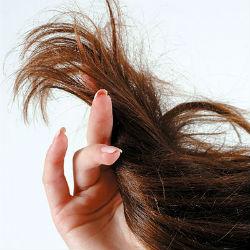Почему волосы секутся и как от этого избавиться?